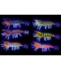 Savage Gear Hybrid Shrimp Egi Jig